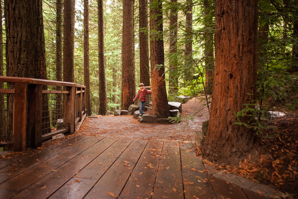 Hoyt Arboretum Things To Do In Portland With Children