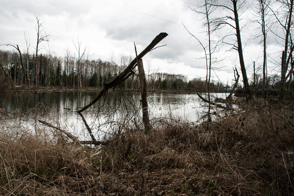 A photograph taken at Whitaker Ponds Nature Park