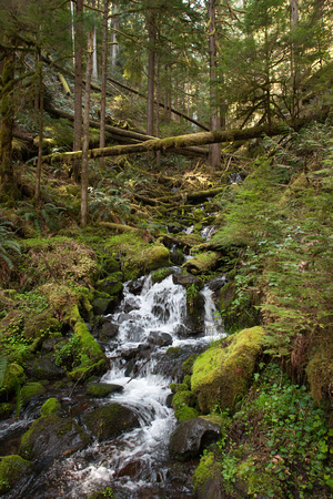 A photograph taken at Pup Creek Falls