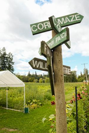 A photograph taken at Fiala Farms corn maze and pumpkin patch