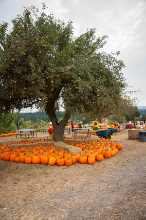A photograph taken at Plumper Pumpkins Patch