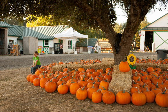 Plumper Pumpkins Patch Things To Do In Portland With Children