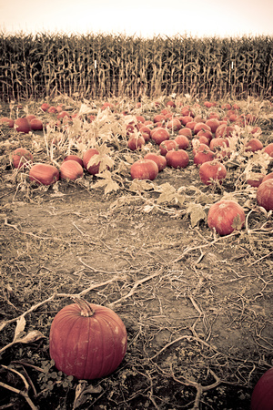 A photograph taken at Portland Pumpkin Farm