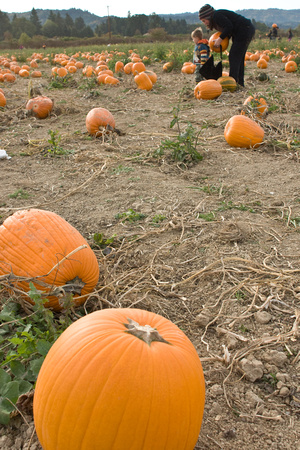 A photograph taken at The Pumpkin Patch on Sauvie Island