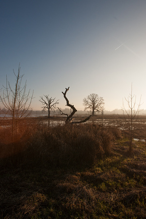 A photograph taken at Tualatin River National Wildlife Refuge