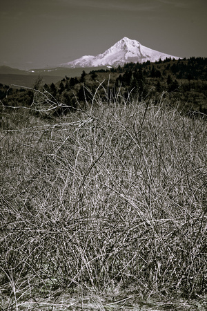 A photograph taken at Powell Butte Nature Park